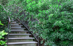 Wrought-iron staircase in the bush. In high quality Royalty Free Stock Photography