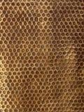 Wrought iron texture 2. Iron golden gate Royalty Free Stock Photos