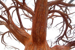Wrought iron tree Royalty Free Stock Photo