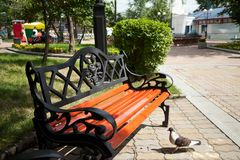 Wrought iron vintage bench with nobody except pigeon in a green summer park. Beautiful decorated retro style garden furniture in the sunlight Royalty Free Stock Photos