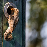 Wryneck the provider Royalty Free Stock Photos
