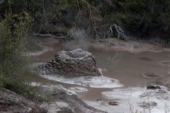 wrzący borowinowy basen Fotografia Stock