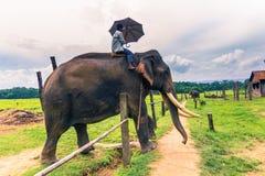 Wrzesień 09, 2014 - Wyszkoleni słonie w Chitwan parku narodowym, Zdjęcia Stock