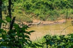 Wrzesień 09, 2014 - gawiala krokodyl w Chitwan parku narodowym, Zdjęcia Royalty Free