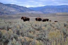 Wrzesień w Wyoming Zdjęcie Royalty Free