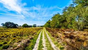 Wrzosów lasy w Hoge Veluwe rezerwacie przyrodym i pola obrazy royalty free