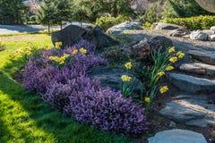 Wrzos 5 I Daffodils obrazy stock