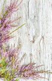 Wrzos i stary drewniany tło Fotografia Stock