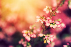 Wrzos kwitnie na spadku, jesieni łąka w olśniewającym słońcu Obraz Stock