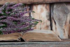 Wrzos na tle stara książka Zdjęcie Stock