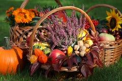 Wrzos w jesień wickers zdjęcie stock
