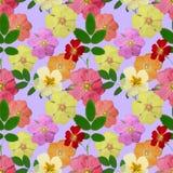 Wrzosiec, dziki wzrastał, róża Bezszwowa deseniowa tekstura kwiaty Zdjęcie Stock