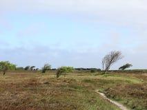 Wrzosowisko krajobraz na wyspie Sylt Zdjęcia Royalty Free