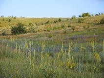 Wrzosowiskowi obszary trawiaści, sucha łąka z kwiatami, Słońce błyszczy nad polem Zdjęcia Royalty Free
