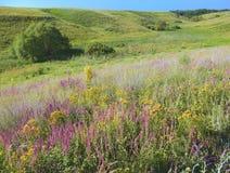 Wrzosowiskowi obszary trawiaści, sucha łąka z wiele kwiatami, Słońce błyszczy nad polem Zdjęcie Royalty Free