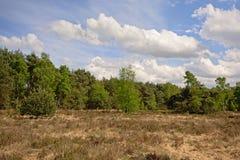 Wrzosowiskowy pustkowie krajobraz z suchej trawy i sosny lasem, Kalmthout, Flanders, Belgia zdjęcie stock