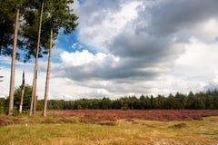 wrzosu krajobraz Fotografia Stock
