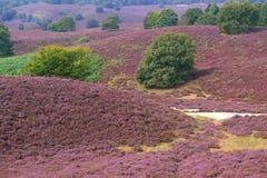 Wrzosu krajobraz Obrazy Royalty Free
