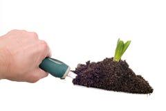 wsadź roślinnych ręce gospodarstwa Zdjęcia Royalty Free