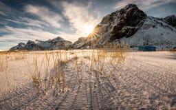 Wschód słońca na górze z kępą trawa na śnieżnym obraz stock