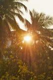 wschód słońca świateł mijania obraz stock