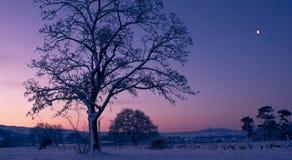 wschód słońca drzewo Zdjęcie Stock