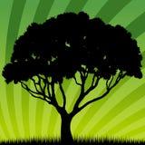 wschód słońca drzewo ilustracji
