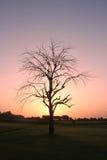 Wschód słońca fotografia z drzewa i koloru żółtego plecy ziemią Obraz Royalty Free