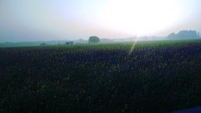Wschód słońca i buetiful ranek obraz royalty free