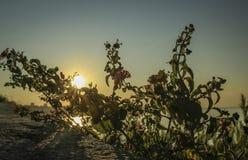 Wschód słońca i kwiat Obrazy Royalty Free