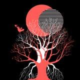 Wschód słońca i zmierzch nad drzewem Fotografia Stock