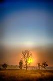 Wschód słońca, Kanha park narodowy, India Zdjęcie Royalty Free