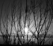 Wschód słońca, krzaki i elektrownia, Obraz Stock