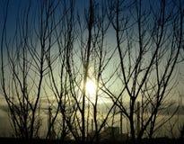 Wschód słońca, krzaki i elektrownia, Fotografia Royalty Free