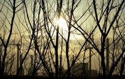 Wschód słońca, krzaki i elektrownia, Obraz Royalty Free