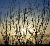 Wschód słońca, krzaki i elektrownia, Zdjęcia Royalty Free