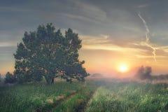 wschód słońca mgłowy krajobrazowy lato światła słonecznego wschód słońca Piękny krajobraz lato natura w mglistym ranku Obrazy Stock