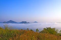 Wschód słońca mgły świeży ranek, idylliczny z suchym kwiatem i obraz stock