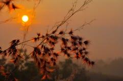 Wschód słońca między trawa kwiatem Zdjęcie Stock