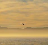 Wschód słońca na Fałszywej zatoce, Południowa Afryka Obraz Stock