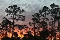 Wschód słońca na Floryda śladzie zdjęcie stock