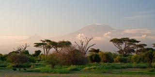 wschód słońca na kilimandżaro Zdjęcia Royalty Free