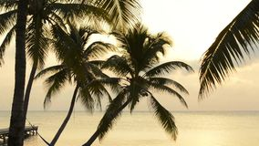 wschód słońca na plaży tropikalny zdjęcie wideo