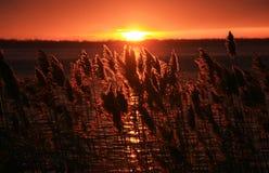 Wschód słońca na St Lawrance rzece Zdjęcia Royalty Free