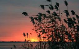Wschód słońca na St Lawrance rzece Obrazy Royalty Free