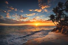 Wschód słońca na tropikalnej wyspie Drzewka palmowe na piaskowatej plaży Obraz Stock