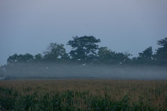 Wschód słońca nad kukurydzanym polem Fotografia Stock