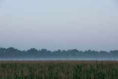 Wschód słońca nad kukurydzanym polem Zdjęcie Royalty Free