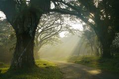 Wschód słońca nad mglistym lasem Zdjęcia Royalty Free