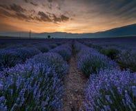 Wschód słońca nad polami lawenda w Bulgaria obrazy stock